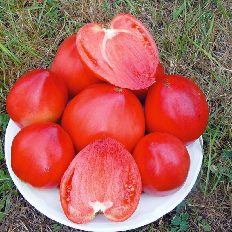 Tomates - Cœur de Bœuf Yasha Yougoslavian