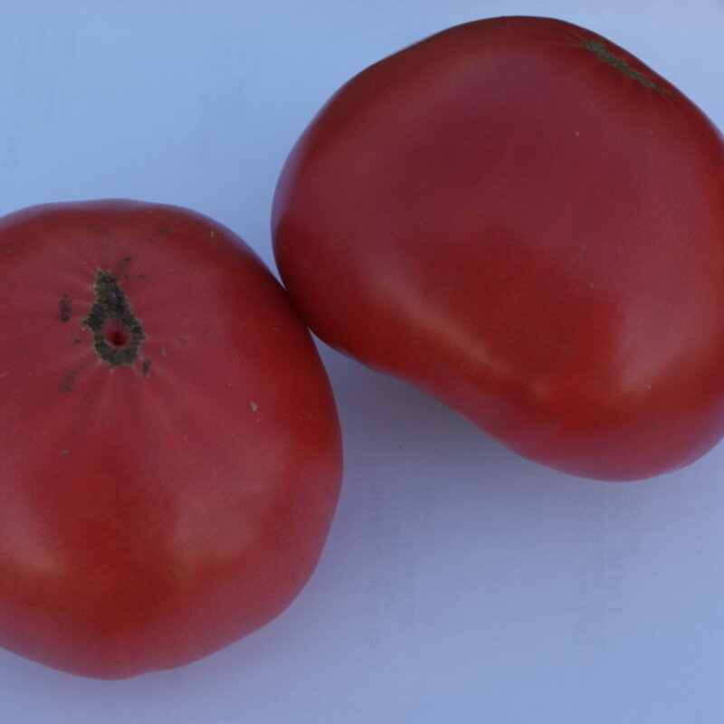 Tomates - Cœur de Bœuf Hongrois
