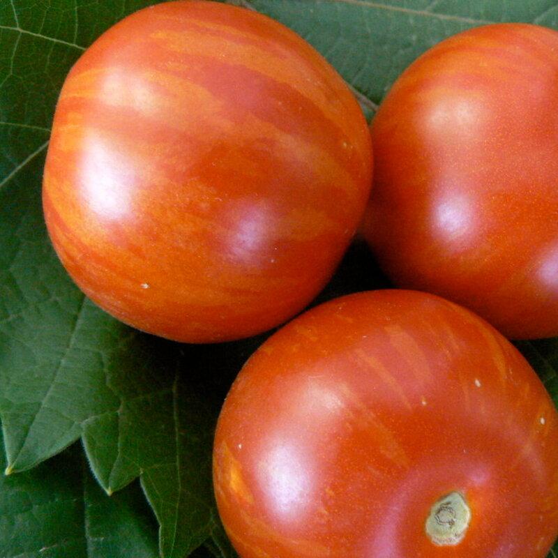 Tomates - Tiger Tom