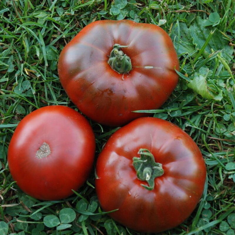Tomates - Paul Robeson