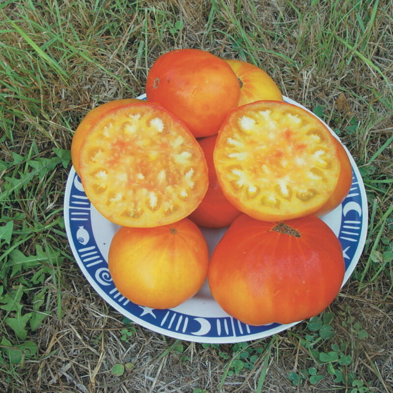 Tomates - Mennonite German Gold