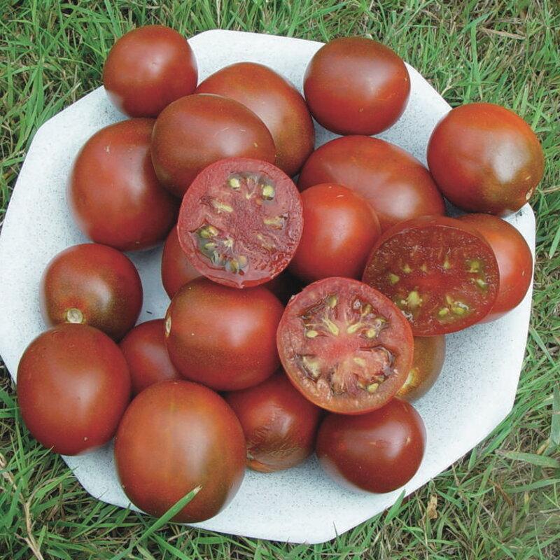 Tomates - Black Prince