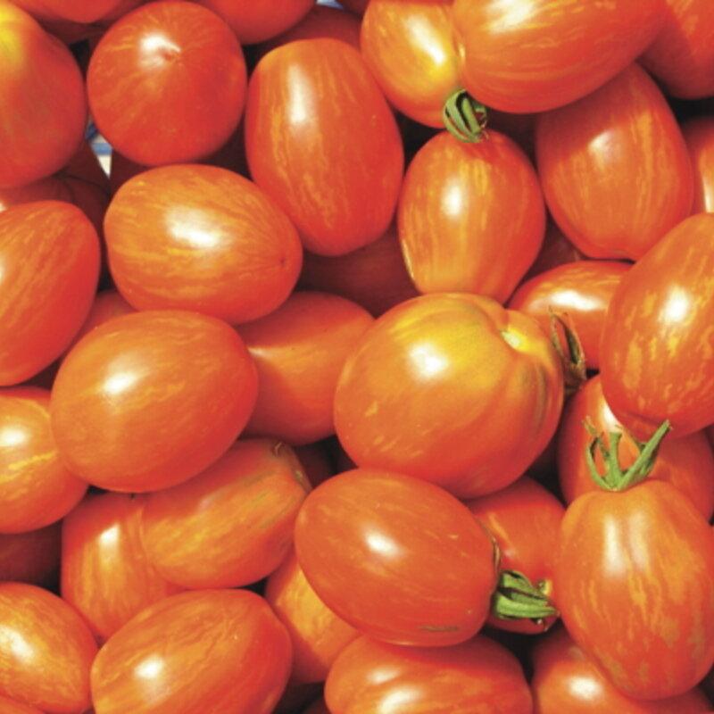 Tomates - Tonnelet