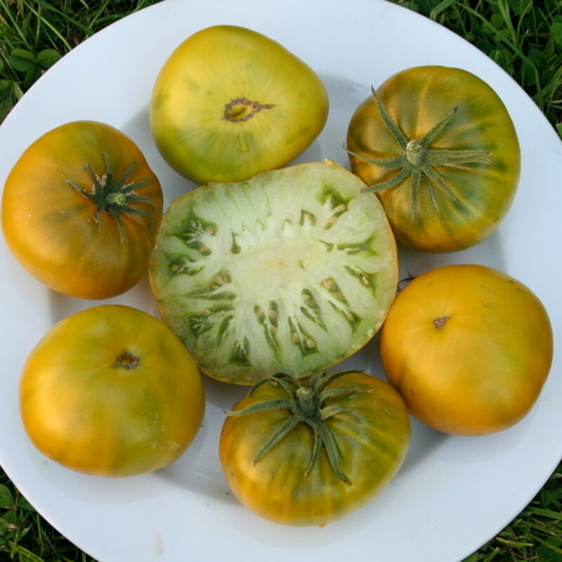 Tomates - Tasty Evergreen