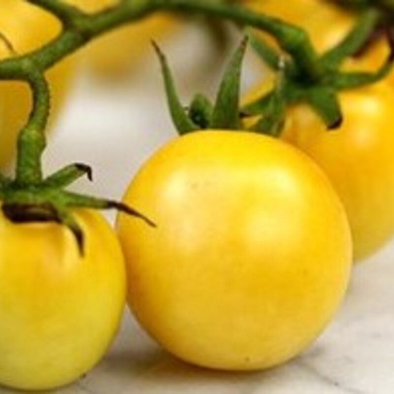 Tomates-Cerises - Dr. Carolyn