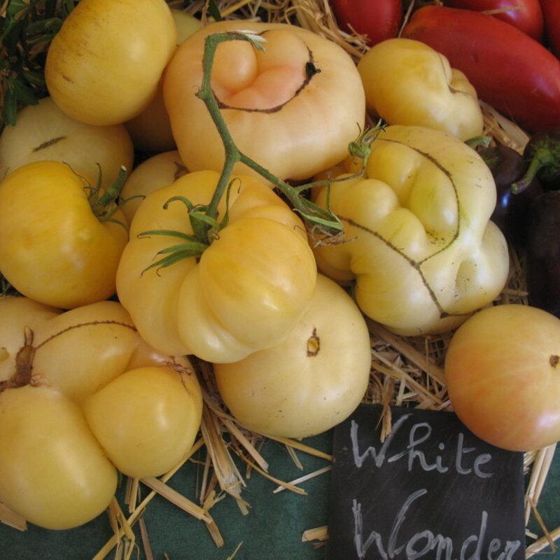 Tomates - White Wonder