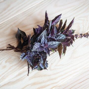 Basilics - Tulsi Krishna à Feuilles Violettes