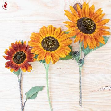 Tournesols à Fleurs - Beauté d'Automne