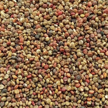 Quinoas - Cocoa Cherry