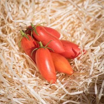 Tomates-Cerises - Sweet Casady