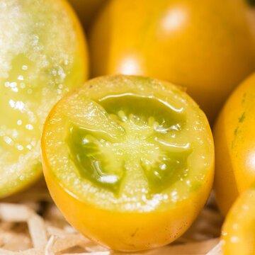 Tomates-Cerises - Saucy Green