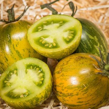 Tomates - Zèbre Robecq