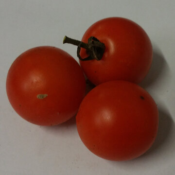 Tomates-Cerises - Cherry Stone