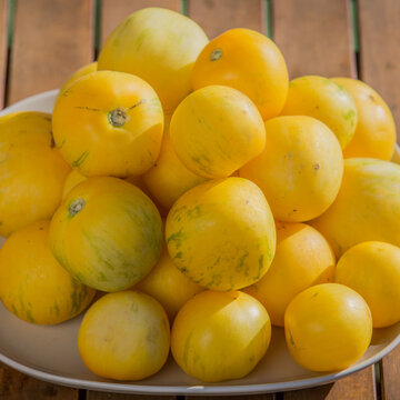 Tomates - Yellow Furry Boar