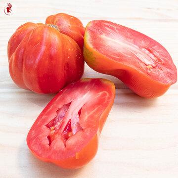 Tomates - Canestrino Di Lucca