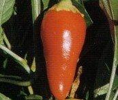 Piments/Poivrons - Floral Gem