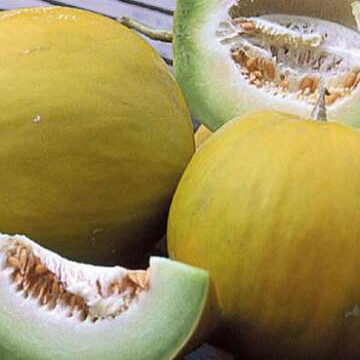Melons - Boule d'Or