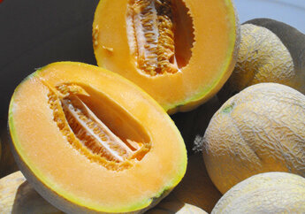Melons - Delicious 51