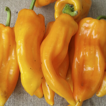 Piments/Poivrons - Yella Bella