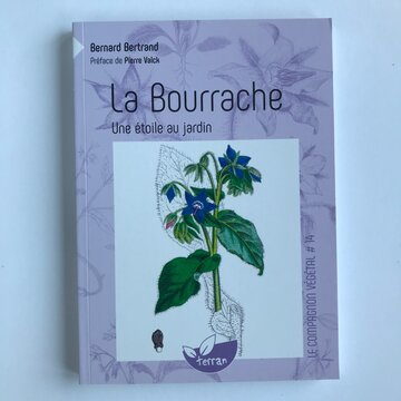 Compagnon Végétal - Vol. 14 - La Bourrache, une étoile au jardin