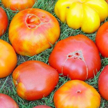 Tomates - Tomates En Mélange à gros fruits
