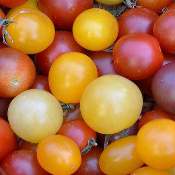 Tomates-Cerises - Tomates En Mélange à petits fruits