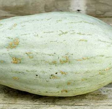 Courges Maxima - Hopi Pale Grey