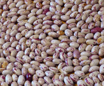 Haricots - Horticultural Taylor's Bean