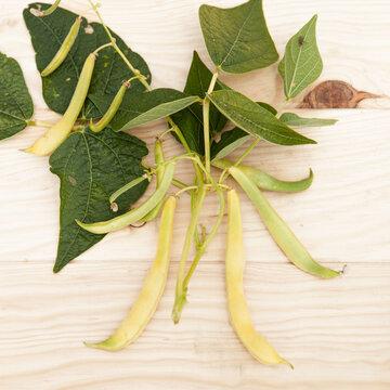 Haricots mangetout - Gold Lumen