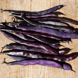 Haricots mangetout - Blauhilde