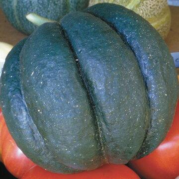Melons - Noir des Carmes