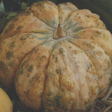 Melons - Prescott à Fond Blanc