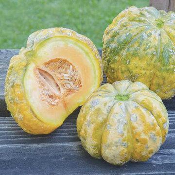 Melons - Prescott Hâtif