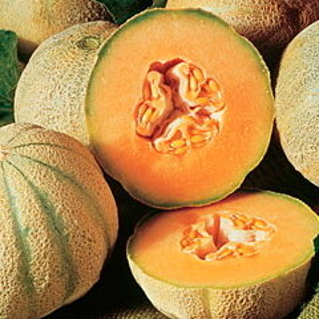 Melons - Cantaloup Charentais