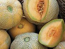 Melons - Schoon's Hard Shell