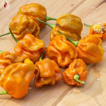 Piments/Poivrons - Mustard Habanero