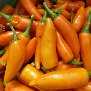 Piments/Poivrons - Bulgarian Carrot
