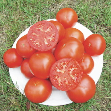 Tomates - Odessa