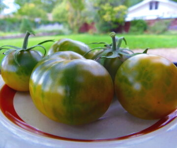 Tomates - Emerald Apple