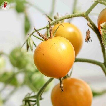 Tomates - Esmeralda Golosina
