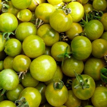 Tomates-Cerises - Grue Vee