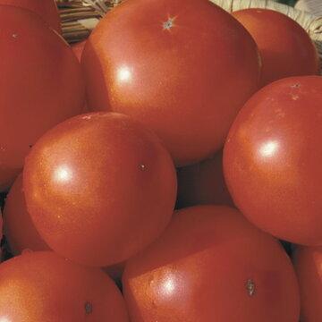 Tomates - Eros