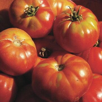 Tomates - Altajsky Urozajnij