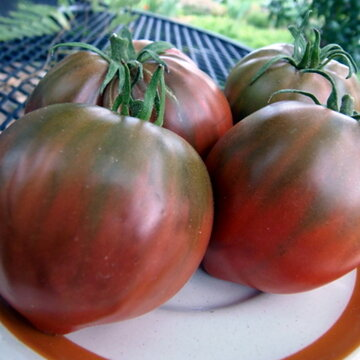 Tomates - Royal Purple