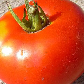 Tomates - Paragon
