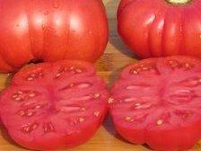 Tomates - Calabash Red