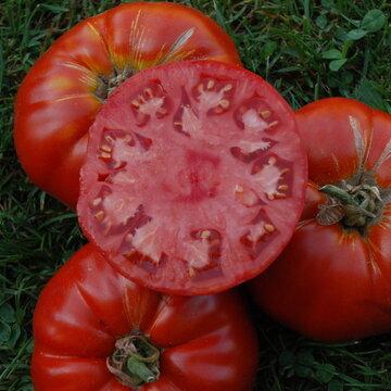 Tomates - Delicious de Burpee