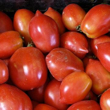 Tomates - Ropreco Paste