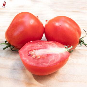 Tomates - Roi Humbert