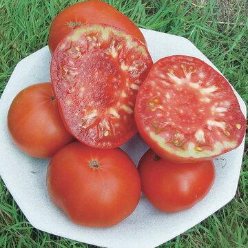 Tomates - Red Brandywine